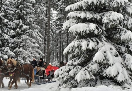 horse drawn carriages in german winter forest - riders, winter, carriages, forest, horses
