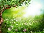 ✰..FIELD OF FLOWERS..✰