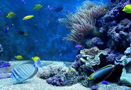Amazing Blue Corals and Fish - Fish, Nature, Underwater, Oceans, Corals, Sealife
