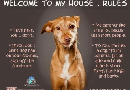 HOUSE RULES - Other & Abstract Background Wallpapers on Desktop