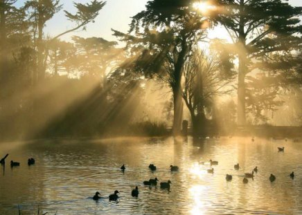 Rays of gold - pond, rays, golden, birds, trees, mists
