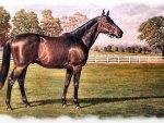 John Henry - Horse f2