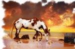 Sea Horse F2