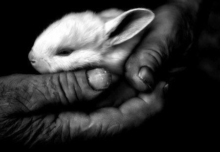 Little thing - Hands, Black and white, Photography, Rabbit