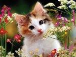 Flowery kitty