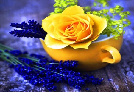 Yellow and blue - cup, blue, rose, lavender, nature, flower, yellow