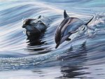 *** Dolphins - painting ***