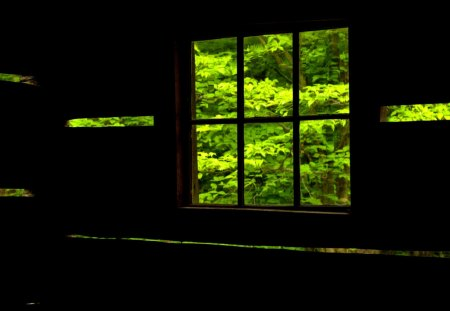 WINDOW VIEW - Nature, Bing, window, view, leaves