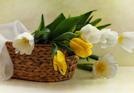 Still Life - lovely, beautiful, drops, still life, yellow tulips, photography, basket, flowers, beauty, nature, petals, tulips, white tulips, tulip