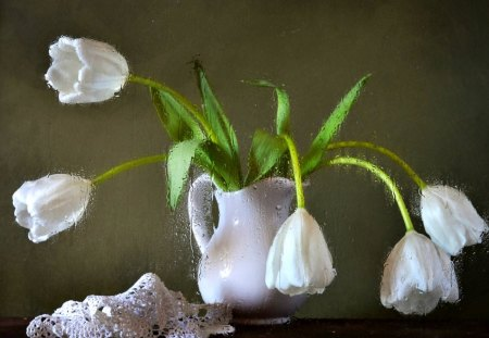 Still Life - vase, drops, still life, photography, flowers, nature, tulips, white tulips, tulip