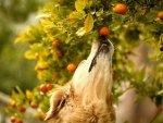 *** Dog and tree ***