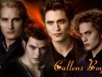 twilight - cullens boys