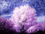 ✰Awesome Trees Infrared✰