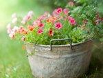 * Fresh Spring Flowers *