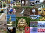 collage birds