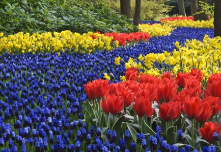River of Flowers - netherlands, hyacinths, keukenhof, park, tulips