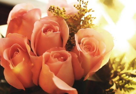 Peach roses flowers nature background wallpapers on - Peach rose wallpaper ...