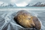 elephant seal napping on the beach
