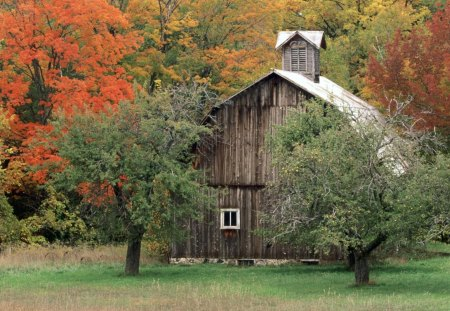 Barn - green, barn, trees, red