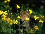 Pup in Flowers
