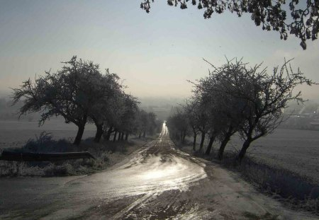 tree lined country road in winter - wet, fields, trees, toad, fog, winter