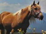 Palomino Grazing - Horse 2