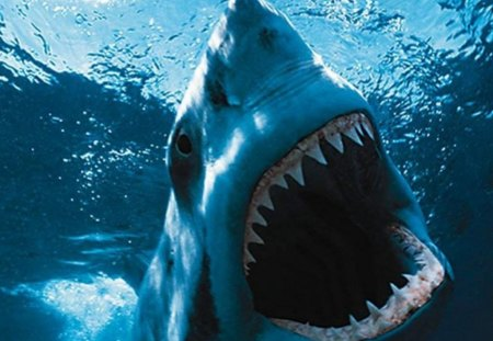 Shark Attack Sharks Animals Background Wallpapers On Desktop