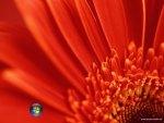 Vista Flower