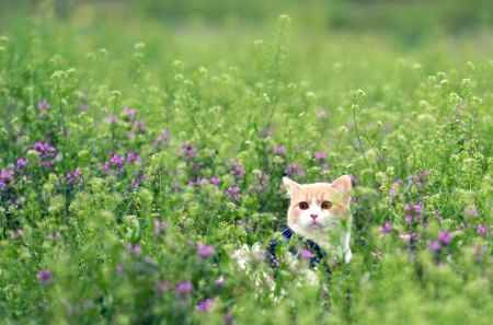 Adorable Cat - pretty, grass, beautiful, adorable, cat eyes, sweet, bokeh, green, flowers, beauty, face, animals, lovely, kitty, cat, cat face, field of flowers, eyes, cats, kitten, field