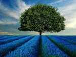 Solitary in Fields of Blue