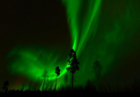 NORTHERN LIGHTS - forest, northern lights, trees, night