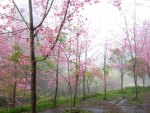 Pink foggy forest