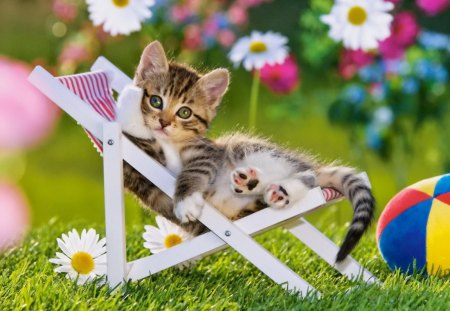 The resting kitty - grass, relax, sunbed, fluffy, rest, cute, sweet, kitty, flowers, adorable, cat, summer, ball, yard, greenery, daisies, spring, green, kitten, garden, photo