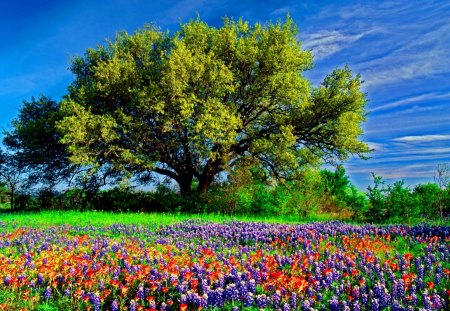 Field of flowers - flowers, colorful, sky, nice, summer, tree, nature, beautiful, lovely, meadow, spring, field, pretty