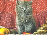 Persian kitten with an apple and wheat