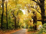 Yellow Forest Road