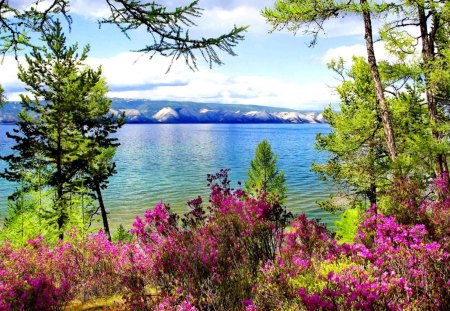 Lovely lake view - colorful, riverbank, shore, view, lake, mountain, tree, water, summer, flowers, nature, river, reflection, branches, blue