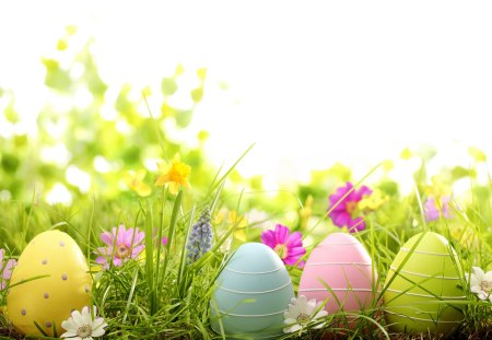 Easter Eggs On Meadow With Spring Flowers Flowers Nature