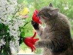 Mmmmm Smells Like Spring!