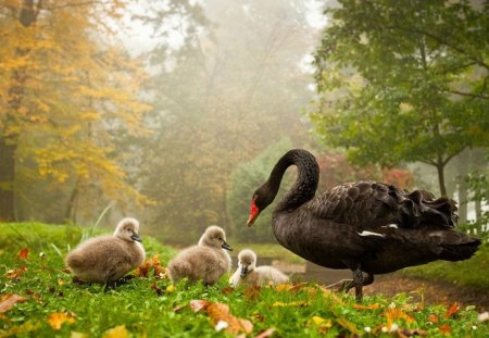 Mother Swan and Ducklings - wings, autumn, brown, grass, trees, swan, day, nature, ducklings, eyes, field, feathers, animals