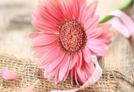 Pink Flower - table, pink ribbon, Gerbera, decoration
