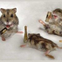 Drunk Mice