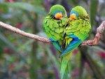 Bird's rhapsody