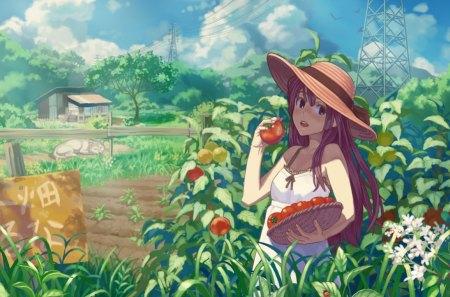 Tomato Farm - Anime Manga World Wallpapers and Images - Desktop Nexus Groups