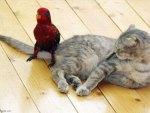 kitten and parrot