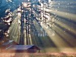 Sun rays at forest