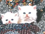 Two white Perian kittens on a quilt