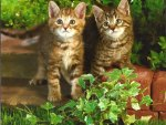 Two kittens in the garden