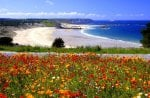 Gorgeous Flowery Beach