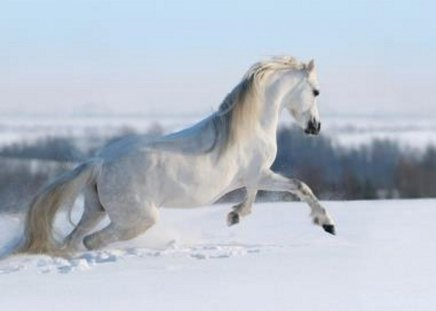 All-Around Beauty in White - nature, white, horse, snow